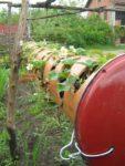 Erdbeeren Schneckenfrei - Die garantiert sicherste Lösung Rohr mit Erdbeerpflanzen Nahaufnahme