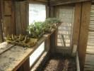 Samen aus Gartenset mit Samen u Erde im Glashaus