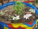 Garten gestalten und viel Geld sparen. Blumenkiste mit Pflanzen