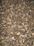 Pilz-Pesto Delikatess bereiten wir aus getrockneten Herbsttrompeten