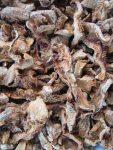 getrocknete Semmelstoppel Pilze werden noch gemahlen und granuliert