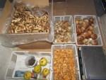 Steinpilze Risotto Qualität lose & Frischpilze eingekauft im Dorf