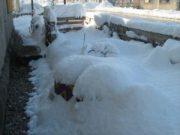 Wintereindrücke Permakultur Garten im Schnee, Kunst im Garten mit Schnee