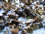 Pilzausstellung mit Waldpilzen in Muljava Kroatien im Herbst