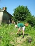 Wildkraeuter sammeln im eigenen Permakultur-Garten
