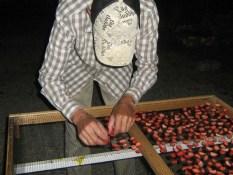 Was Pero Alles trocknet Erdbeerscheiben