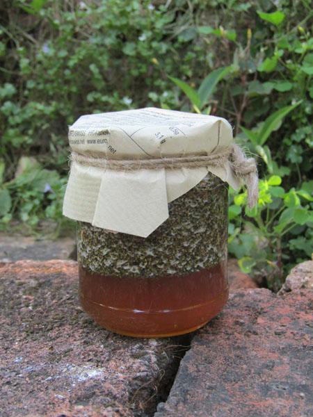 Brennessel Samen im Honig
