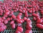 getrocknete Kornelkirschen kaufst Du online bei uns