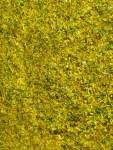 Tausende von Johanniskrautblueten beim Trocknen