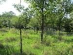 und Heute: alte verlassene Streuobstwiese auf dem Land