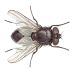 Free Download Fly  APK, APK MOD, Fly Cheat