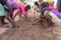 Studenten pflanzen Getreide