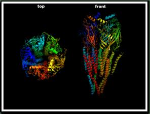 acetylcholine, rezeptor