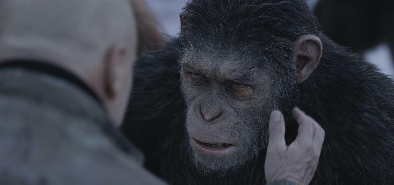 Planet Der Affen Survival Streamcloud