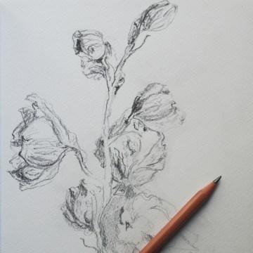 Pencil Sketch Nov 2015