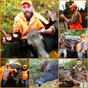 Moose hunt 2016