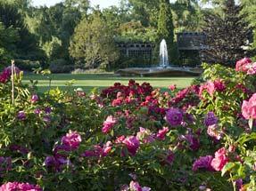 CBG Rose Garden 2