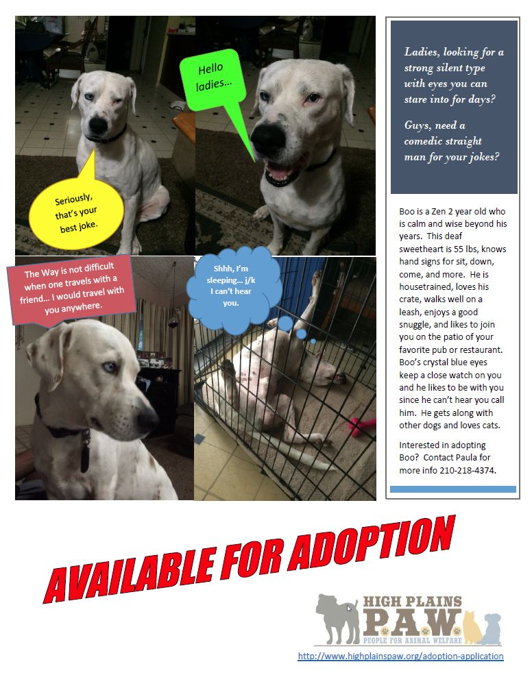 Deaf Dog For Adoption Deaf Network Of Texas