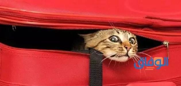 لماذا تختفي القطط يوم العيد الاضحى