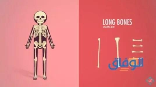 أفضل مسكن للعظام والعضلات حقن