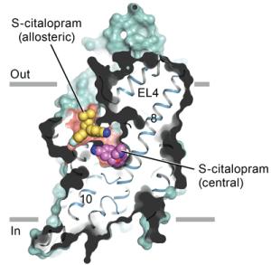 How Antidepressants Block Serotonin Transport