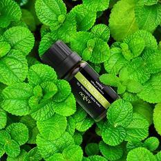 Aromatherapy Top 6 Essential Oils Set 2