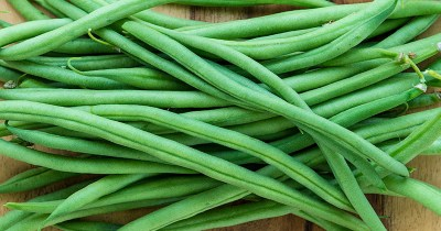 FREE Packet of Green Bean Seeds for Your Garden (First 1,000 Daily)