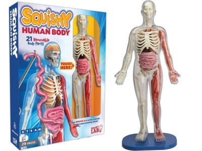 Smart Lab Squishy Human Body Kit Just $15 Shipped (Regularly $30) | Hands-On Fun