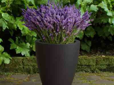 Walmart: Mayne Caprio 18in x 16in Tall Planter (Black) ONLY $54.99 (Reg $109)