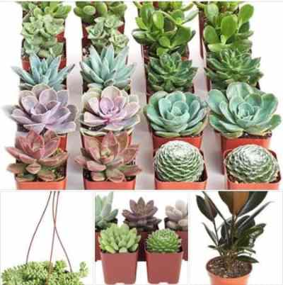 Amazon: Plants and Succulents from Shop Succulents, 20% off for a limited time!