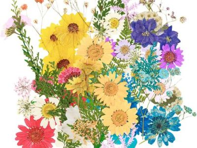 Amazon: 80pcs Dried Flowers for Resin, Just $9.60 (Reg $25.99) after code!