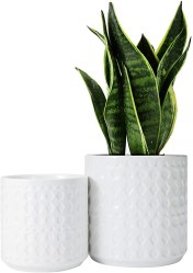 Amazon: White Ceramic Plant Pots Set of 2 for ONLY $11.20 W/Code (Reg. $27.99)