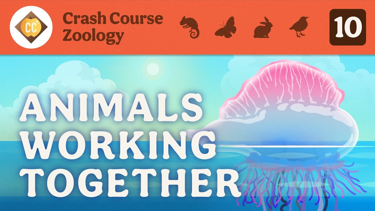 Animals Working Together: Crash Course Zoology #10