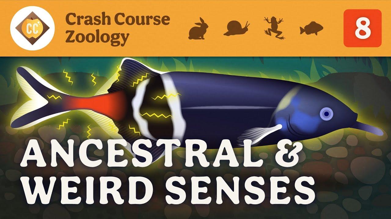 Ancestral & Weird Senses: Crash Course Zoology #8
