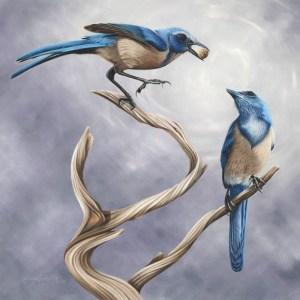 Florida Scrub Jays