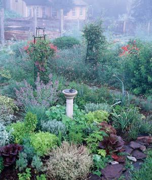 Herb-CompanionAll-SeasonGarden