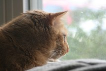 Joe Cat birdwatching