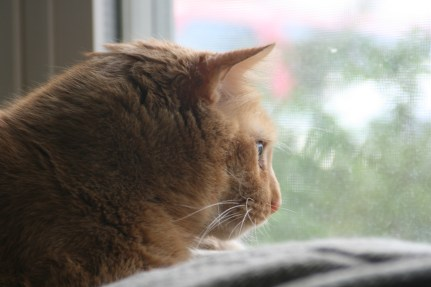 Joe Cat birdwatching