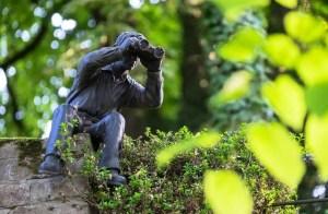 western hunting binoculars