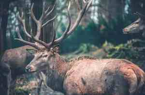 best binoculars for deer antlers