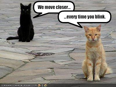 funny-pictures-cats-move-closer-when-you-blink1