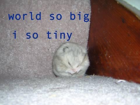 cute cat photo tiny small