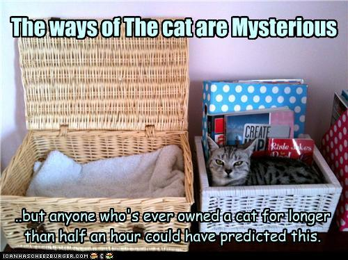 The Ways of the Cat are Mysterious