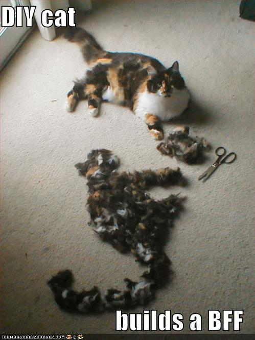 funny-pictures-your-cat-has-built-a-bff