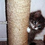 funny-pictures-kitten-scratching-post-distracted