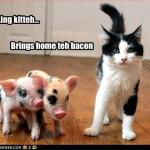 funny-pictures-cat-brings-home-bacon