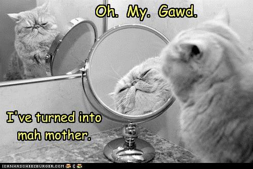 funny-pictures-oh-my-gawd