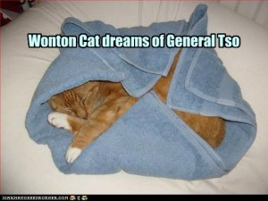 wonton cat