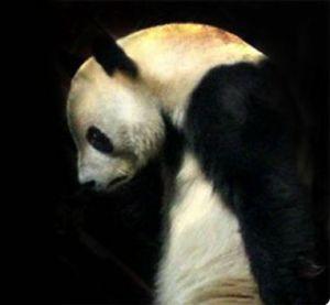 sad panda is sad about Jessica Trent