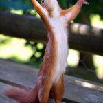 Squirrel want